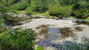 This is one river where  salmon come to spawn. I guess they won't be back.