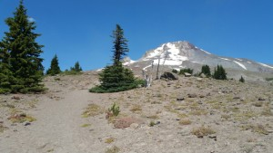A lone evergreen tree stands tall on the foothills of Mt Hood.